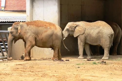 baby elefant gewicht