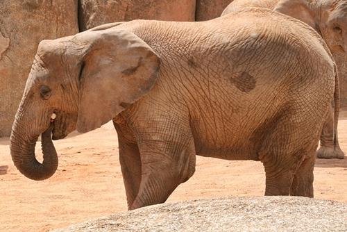 Paige Hathaway lsst sich von Elefanten den Hintern