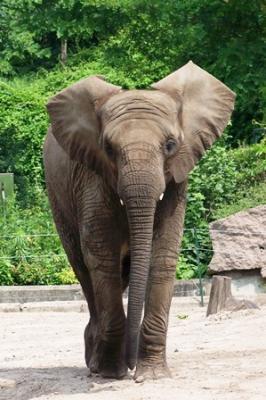 Tana, noch im Tierpark Berlin