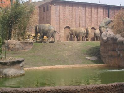 Teil von Ganesha-Mandir..... der neueröffneten Elefantenanlage